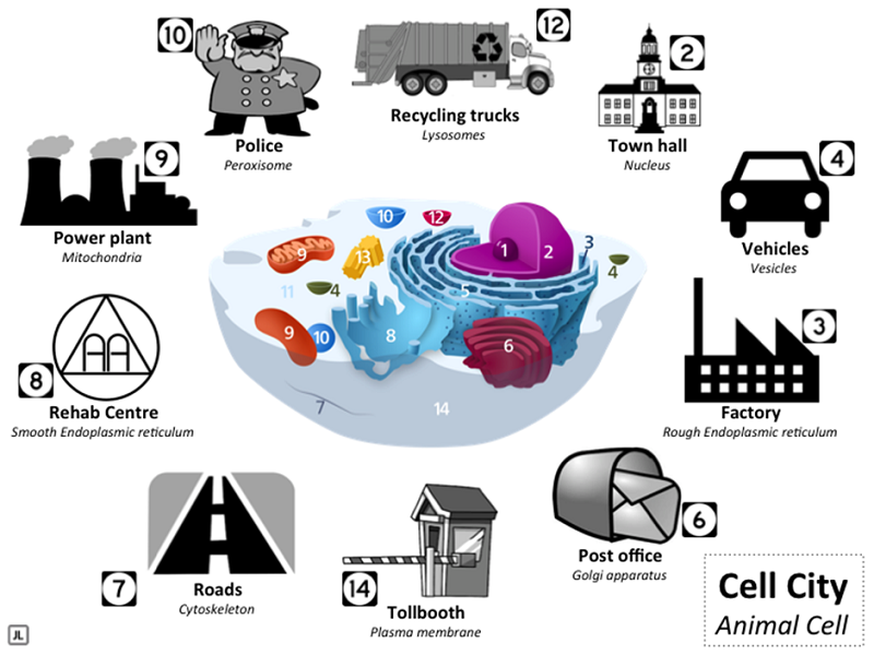 "Fig 3 - ""Structures in an animal cell presented with corresponding buildings or structures found in a city"""