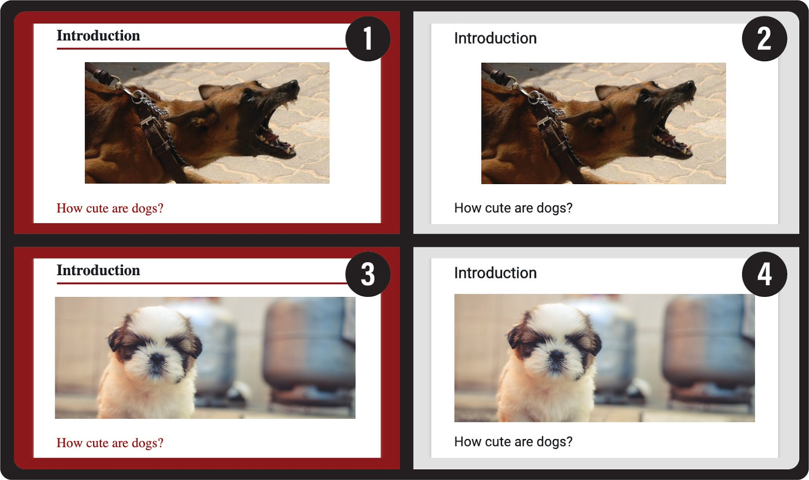 Dog images showing variations on color and contrast