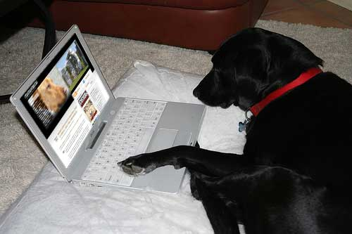 dog on a laptop