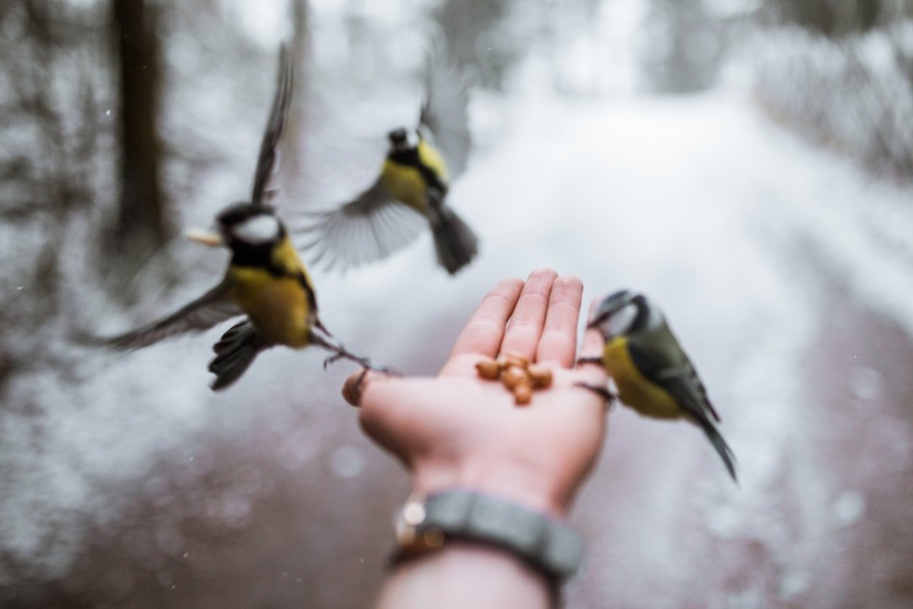 birds eating from hand