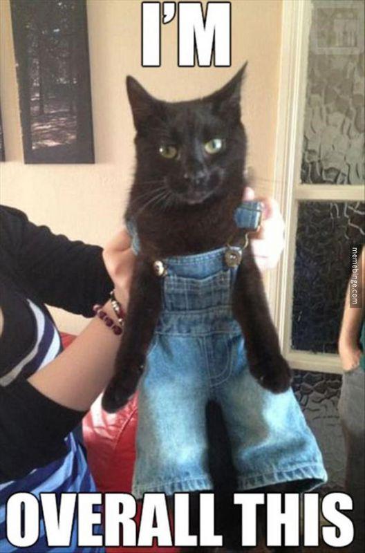 Cat_Meme_Overall.jpg