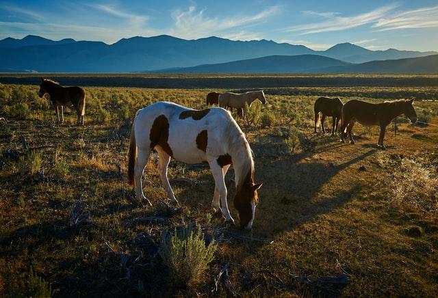 Horses_in_Pasture.jpg