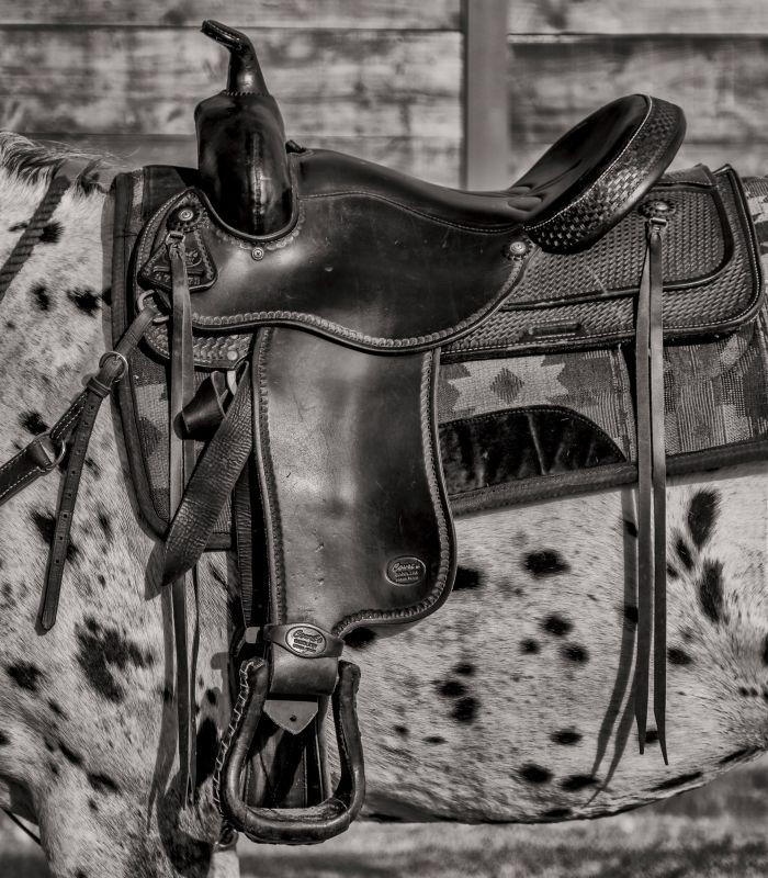 Saddle_on_Horse.jpg