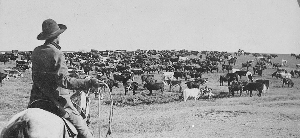Roundup_on_the_Sherman_Ranch,_Genesee,_Kans._Cowboy_with_lasso_readied_looks_beyond_the_herd_on_the_open_range_to_his_fe_-_NARA_-_533791.jpg