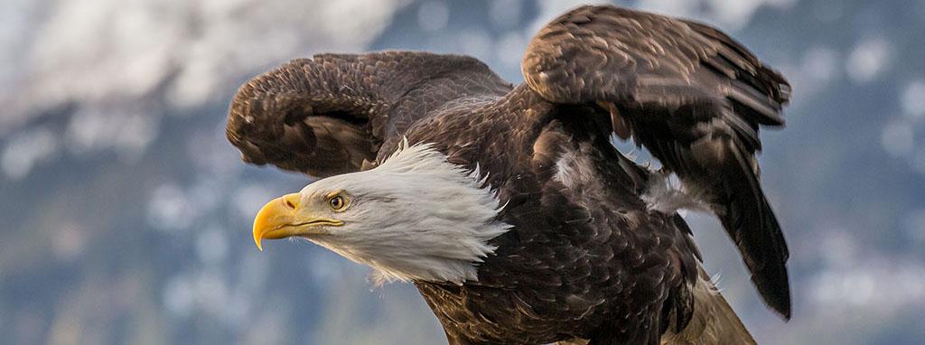 nature-bird-wing-wildlife-beak-eagle-383325-pxhere.com.jpg